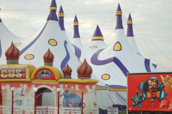 Weber Bros. Circus 2 | Baytex - 1