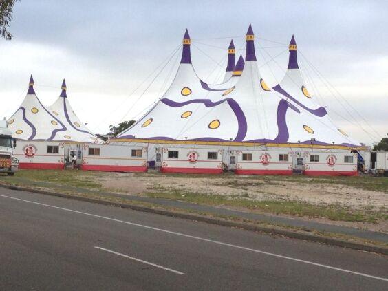 Weber Bros. Circus 2 | Baytex - 2